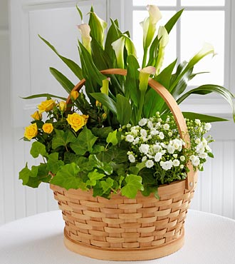 BHG Cheerful Wishes Blooming Basket