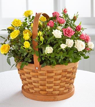 BHG Rose Garden Basket