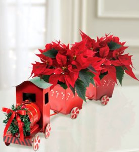 poinsettia express